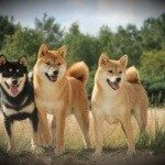 doge-pack-weekly-review-300x199